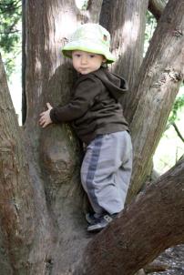 al in tree